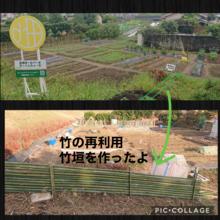 伐採した竹の再利用。農園はさらに進化したよ。